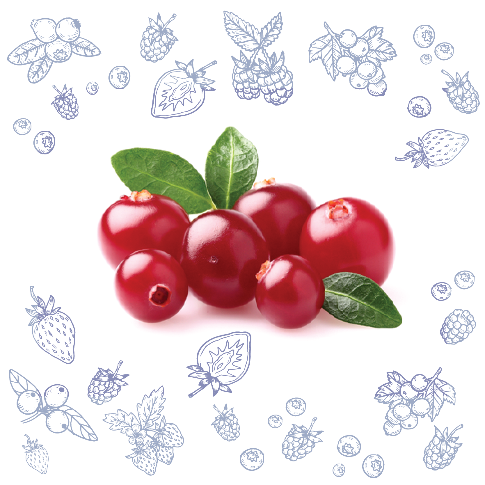 Polarica-Berries-lingonberry